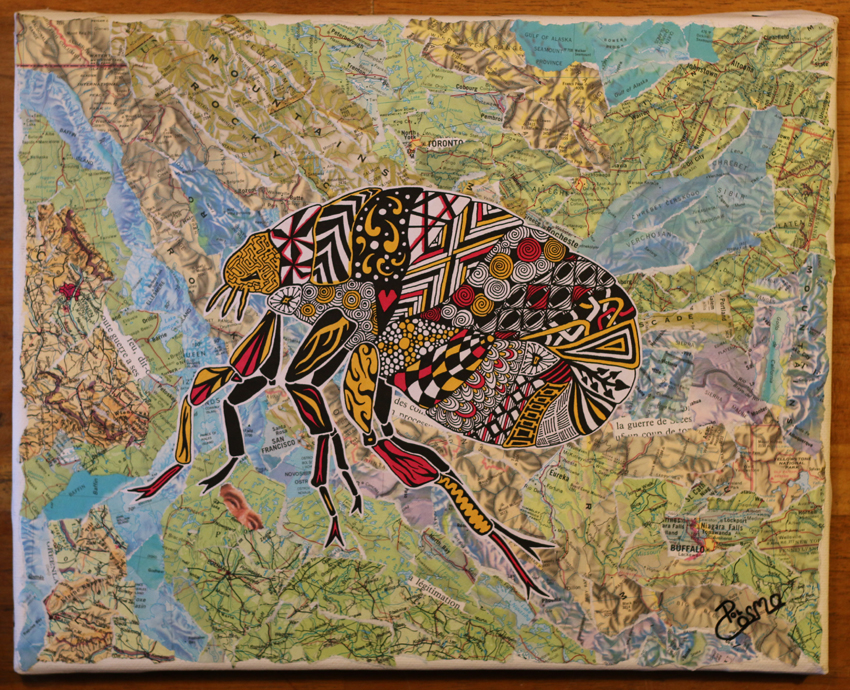 'Siphonaptera' on collage map