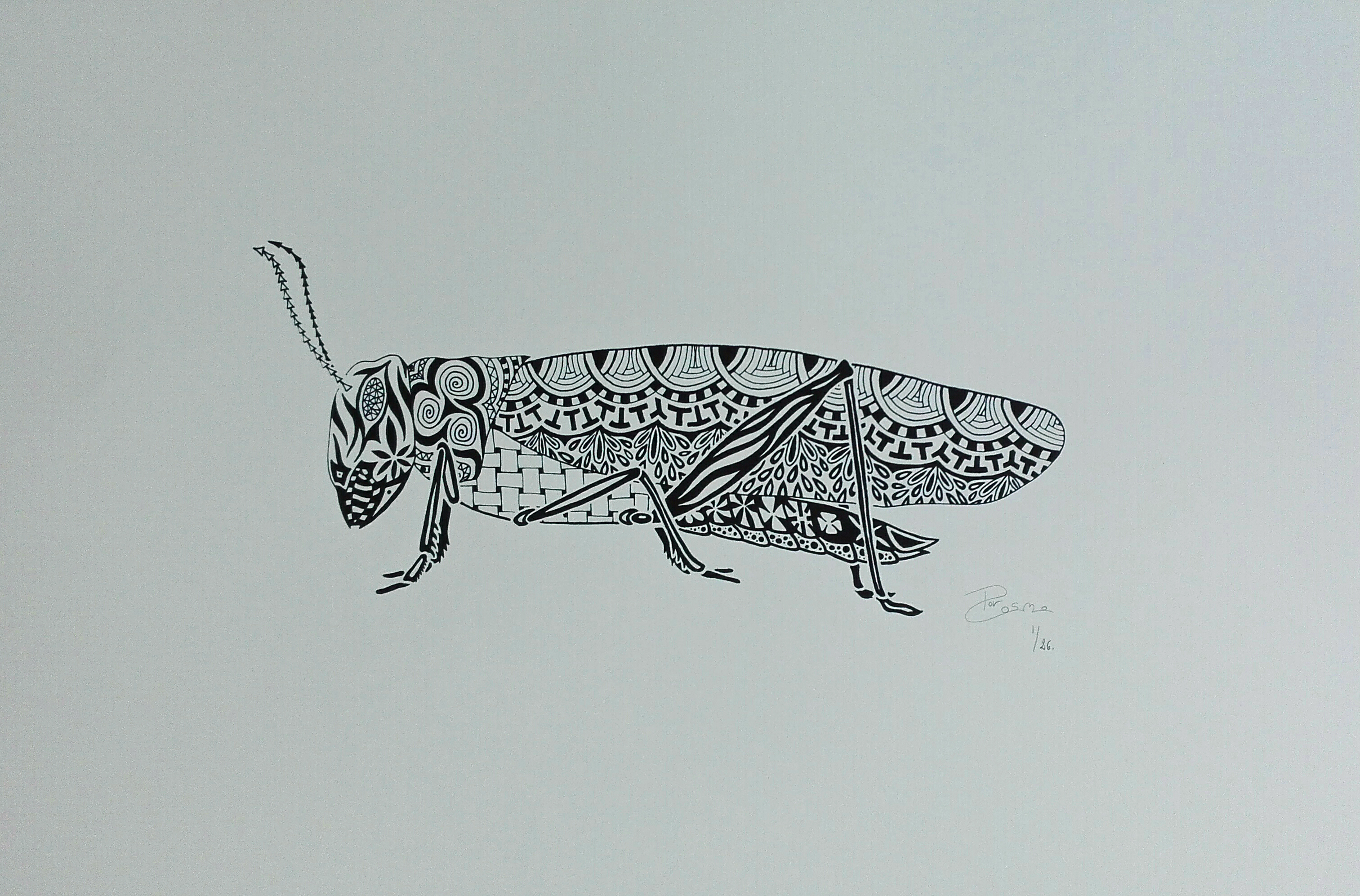 Screen print - Grasshopper
